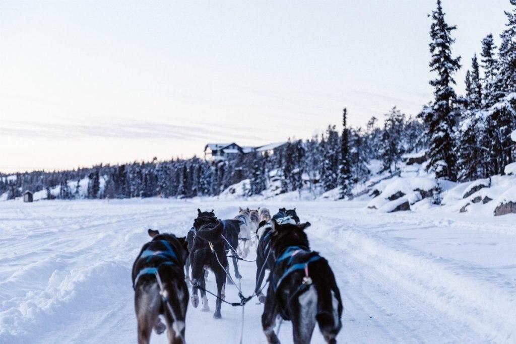 Hundeschlittenfahrt in Grönland