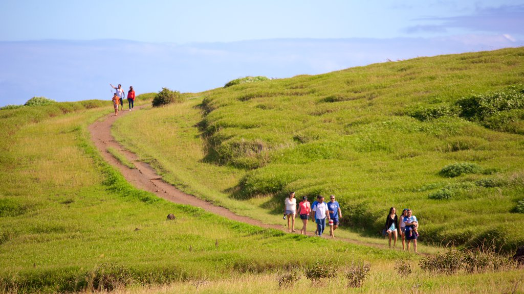 Easter Island featuring tranquil scenes and hiking or walking as well as a large group of people