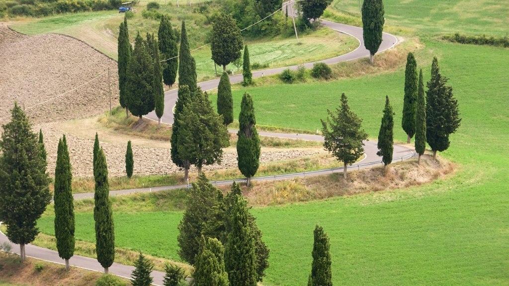 Monticchiello which includes a garden