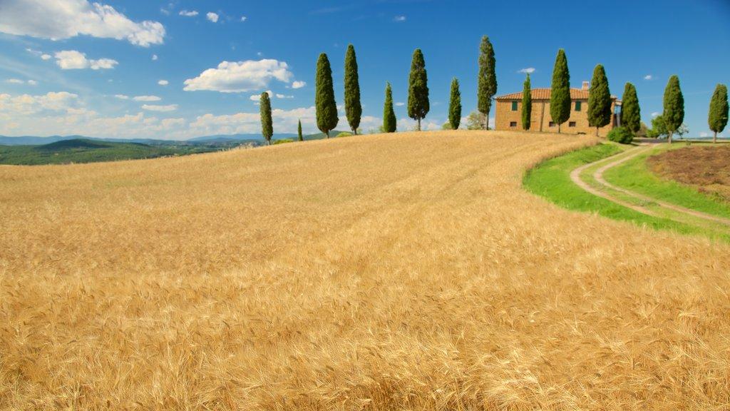 Tuscany which includes farmland