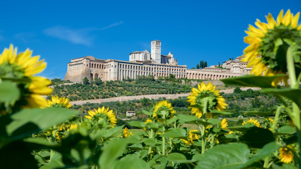 Assisi showing heritage architecture and flowers