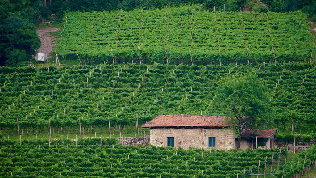Trentino ofreciendo tierras de cultivo