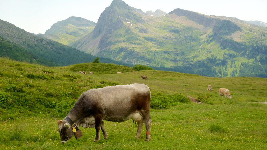 Passo Rolle which includes land animals