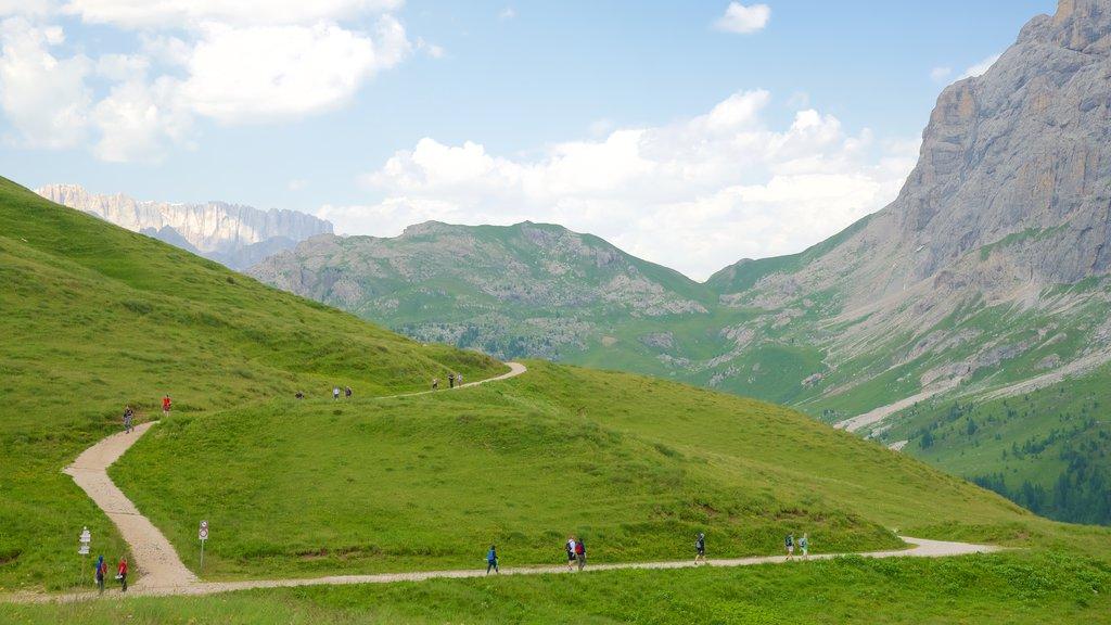 Passo Rolle mostrando vistas de paisajes y montañas