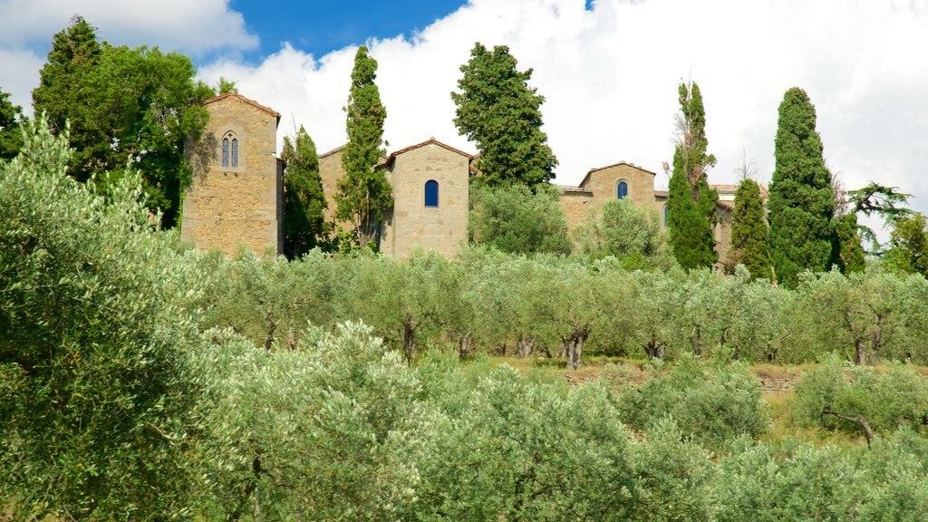 Cortona featuring farmland