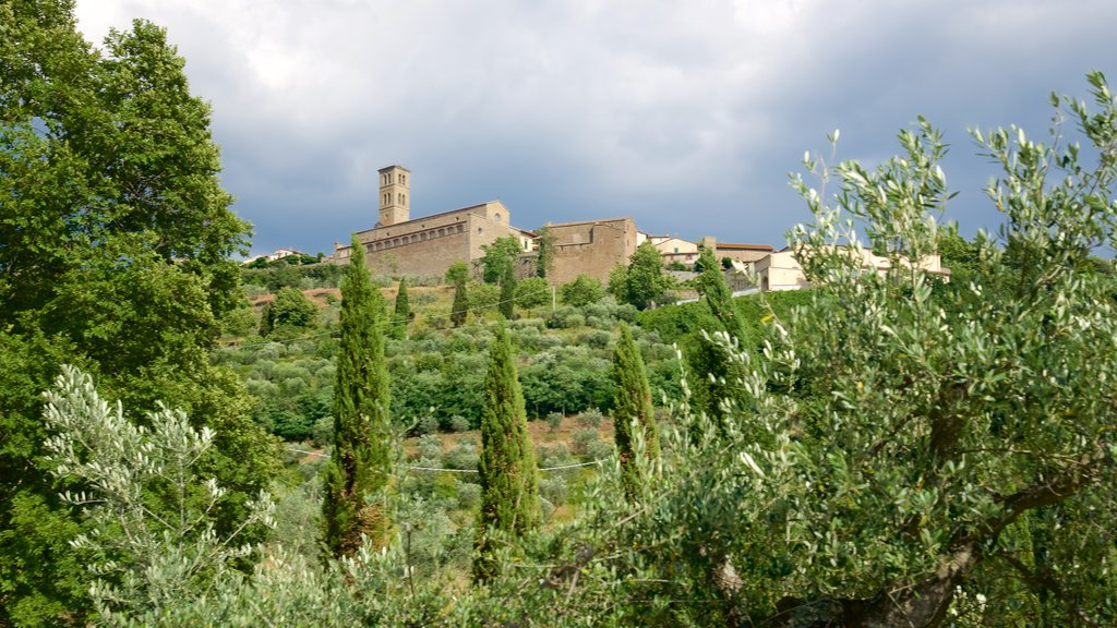 Cortona which includes farmland