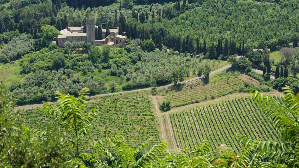Orvieto featuring farmland