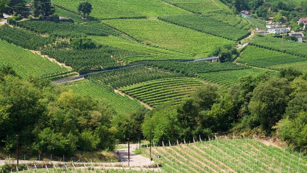 Bolzano showing farmland