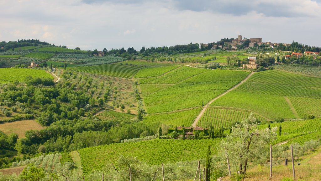 Panzano in Chianti which includes a small town or village and farmland