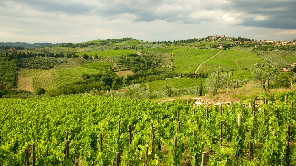 Panzano in Chianti featuring landscape views and farmland