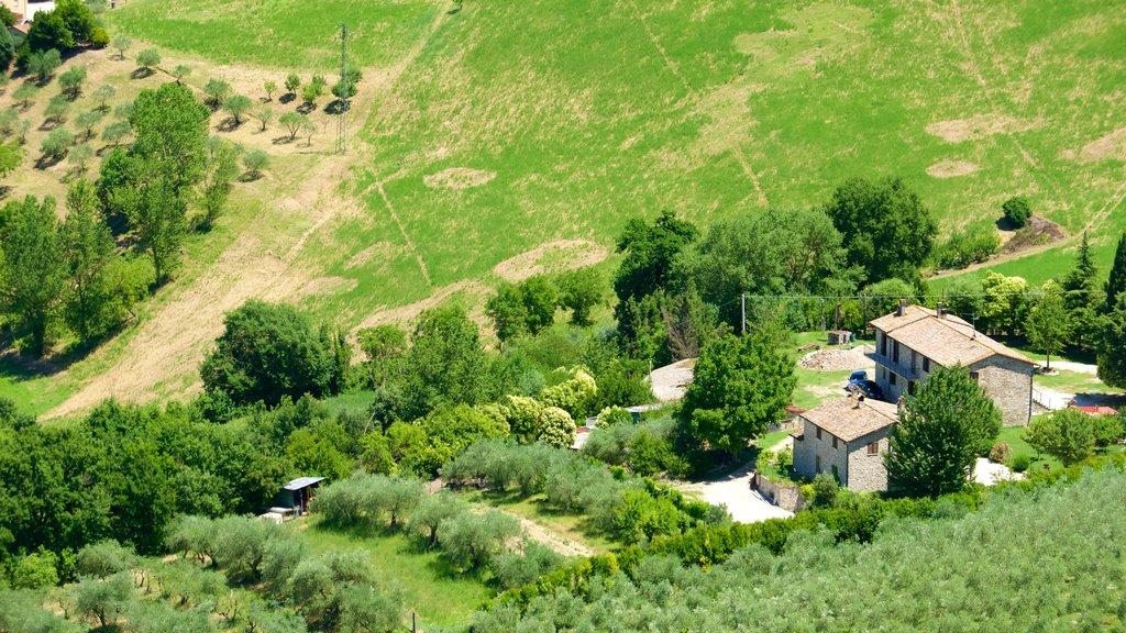 Todi showing a house, landscape views and farmland