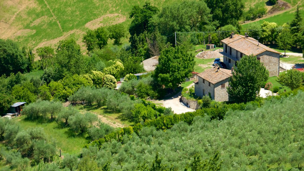 Todi showing a house and farmland