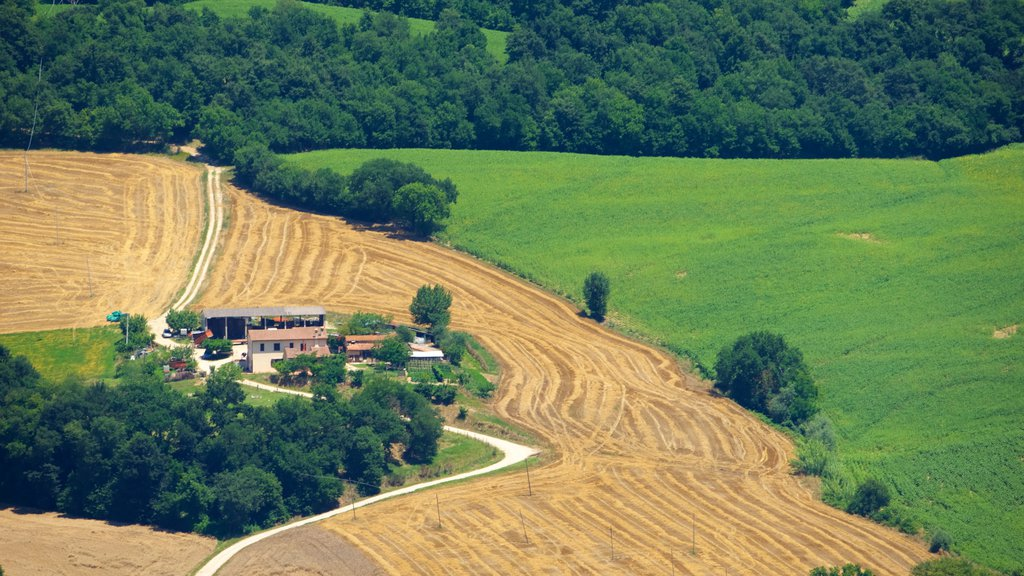 Todi featuring farmland