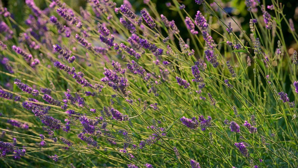 Monticchiello which includes flowers