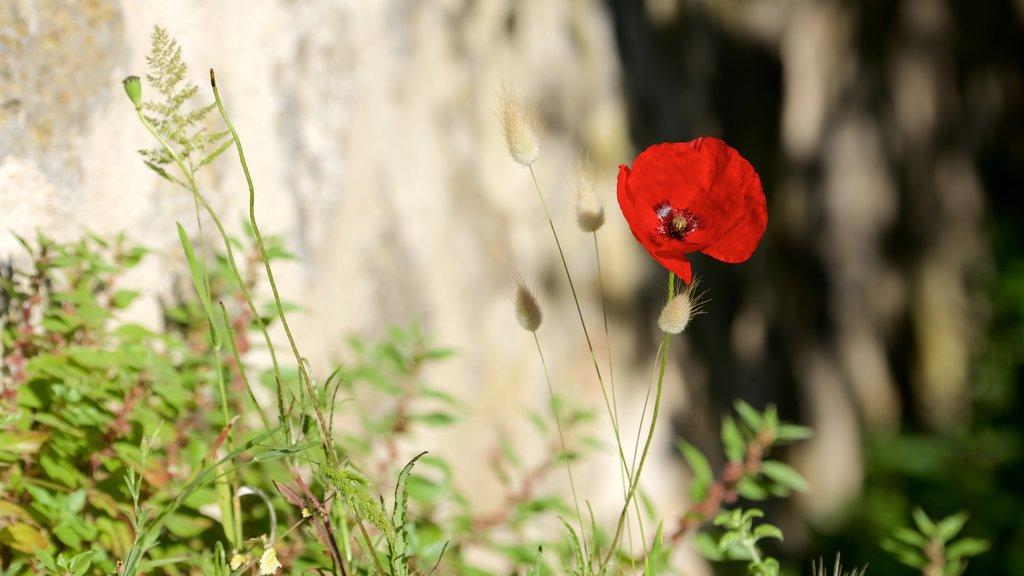 Talamone que incluye flores