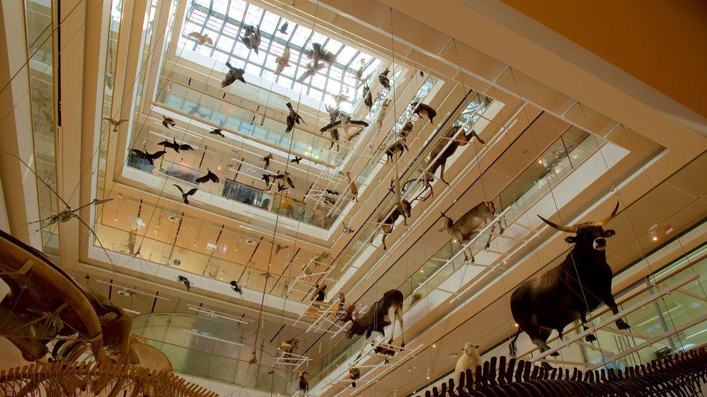 Museo Tridentino di Scienze Naturali showing art and interior views