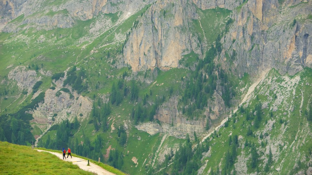 Passo Rolle which includes mountains and hiking or walking