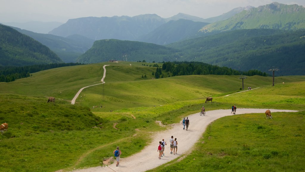 Passo Rolle featuring land animals and tranquil scenes as well as a small group of people