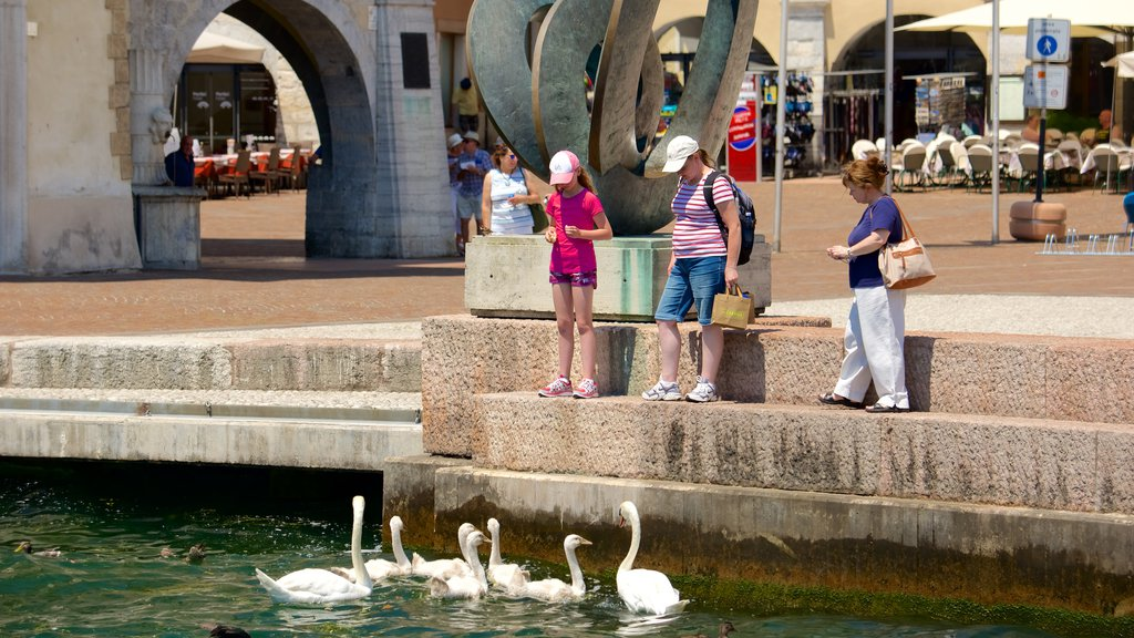 Trentino featuring a pond, a city and bird life