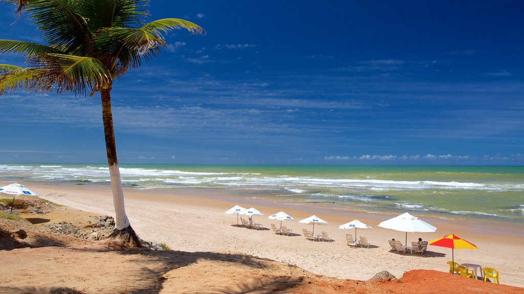 Flamengo Beach mostrando cenas tropicais e uma praia de areia