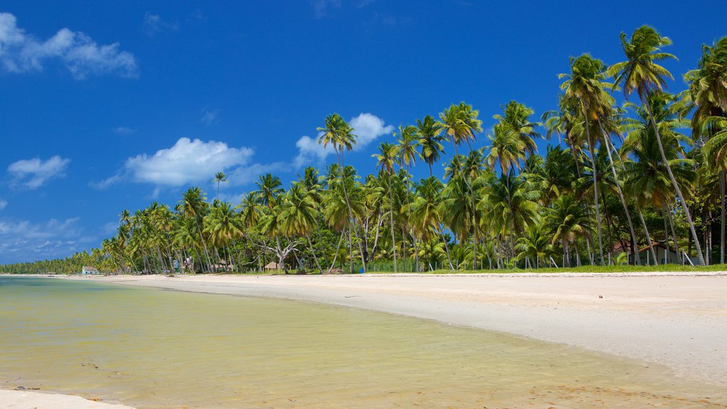 Tamandare which includes a beach and tropical scenes