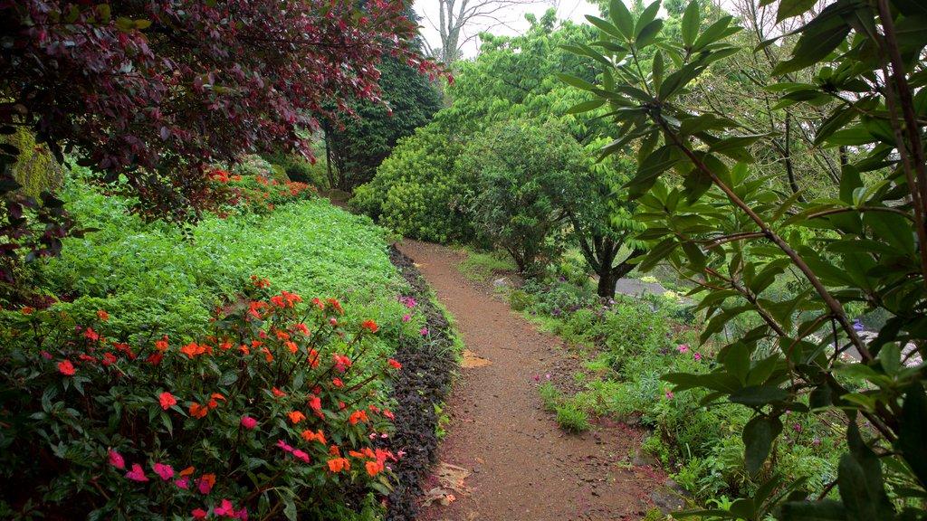 Le Jardin Lavender Park which includes flowers and a park