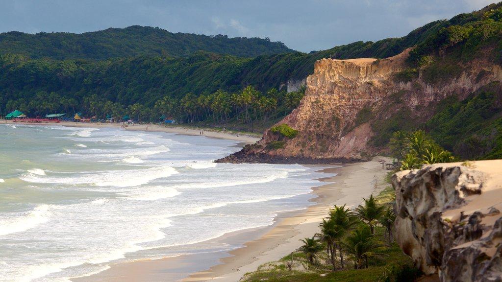 Pipa mostrando paisagens litorâneas, litoral acidentado e uma praia