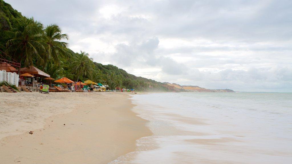 Pipa que inclui uma praia de areia, paisagens litorâneas e cenas tropicais