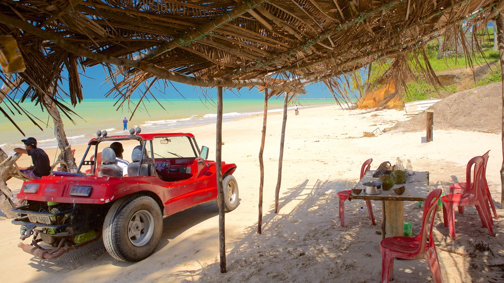 Maceio featuring off road driving, a sandy beach and general coastal views