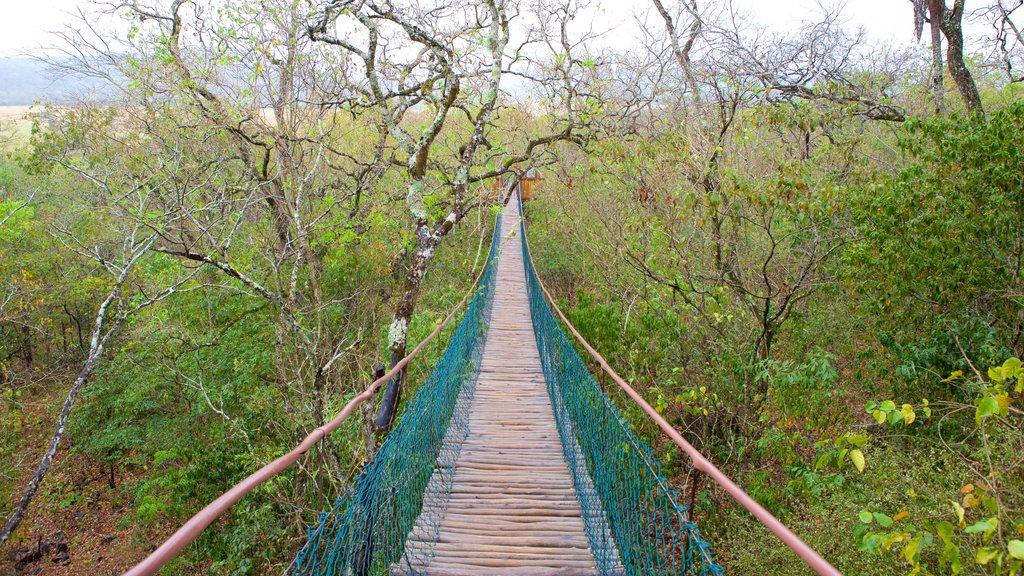 Grutas de São Miguel que inclui uma ponte suspensa ou passarela entre as árvores