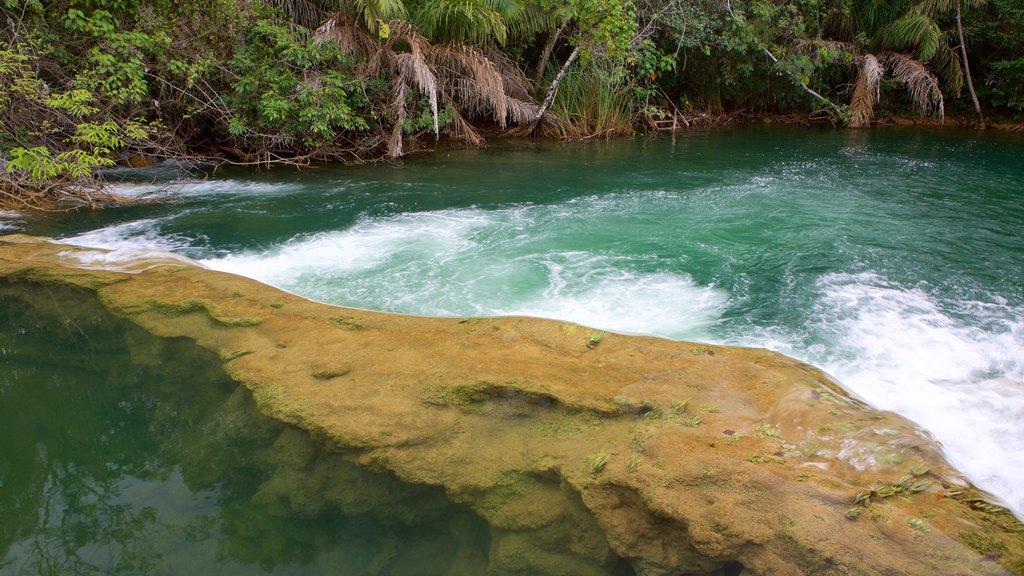Parque Ecológico Rio Formoso caracterizando um rio ou córrego, floresta tropical e córrego