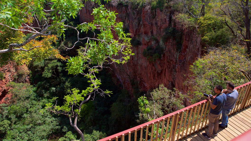 Bonito featuring forests, views and a gorge or canyon