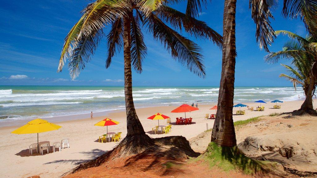 Flamengo Beach que inclui ondas, cenas tropicais e uma praia