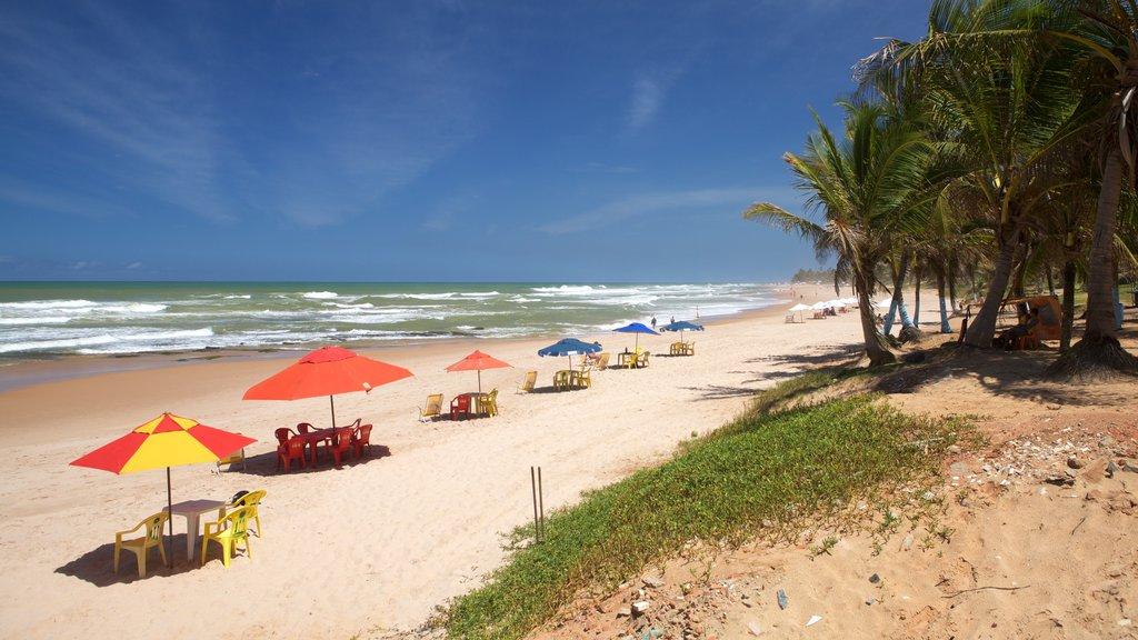 Flamengo Beach que inclui paisagens litorâneas, cenas tropicais e uma praia