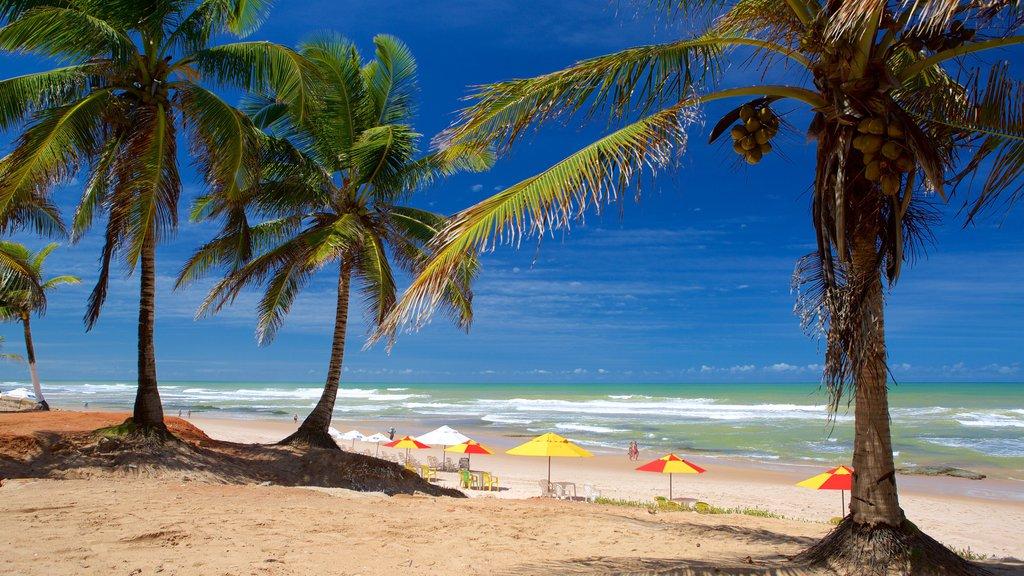 Flamengo Beach caracterizando paisagens litorâneas, uma praia e cenas tropicais