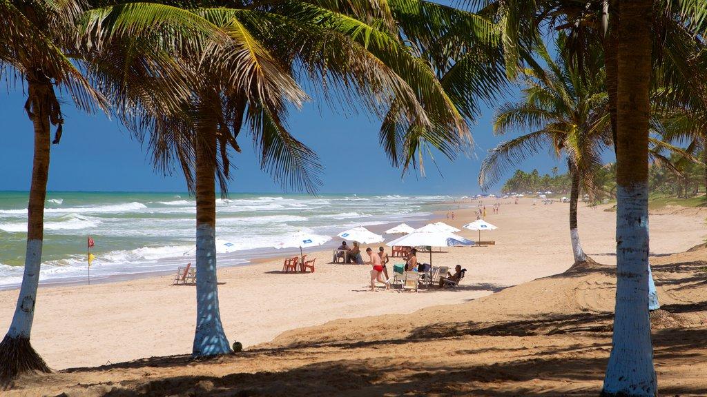 Flamengo Beach mostrando uma praia de areia, cenas tropicais e paisagens litorâneas