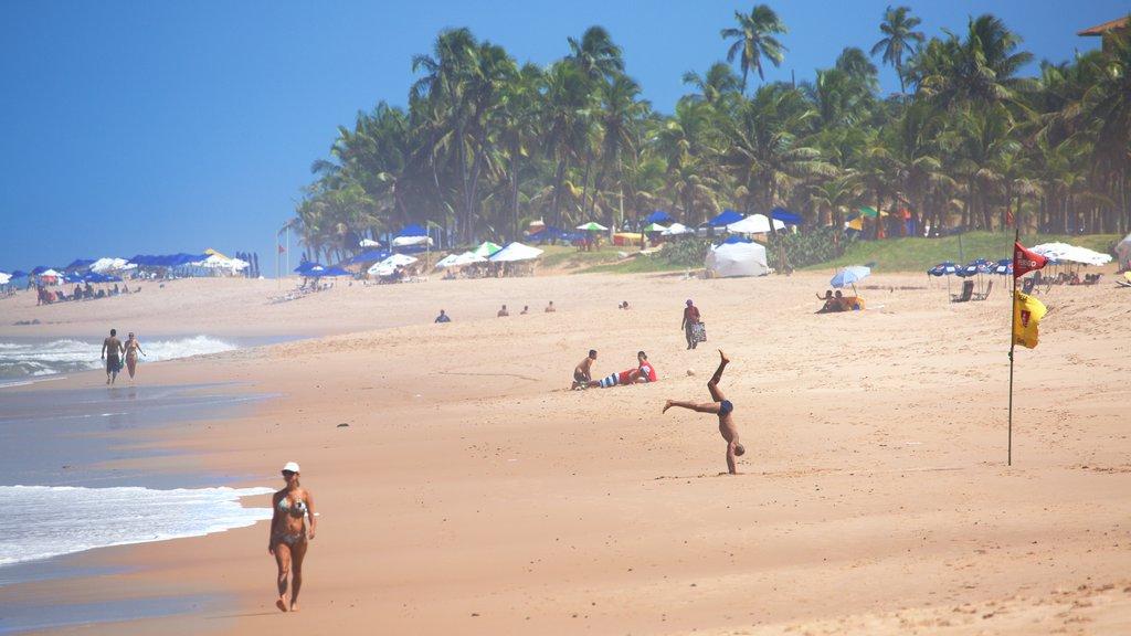 Flamengo Beach mostrando paisagens litorâneas, uma praia de areia e cenas tropicais