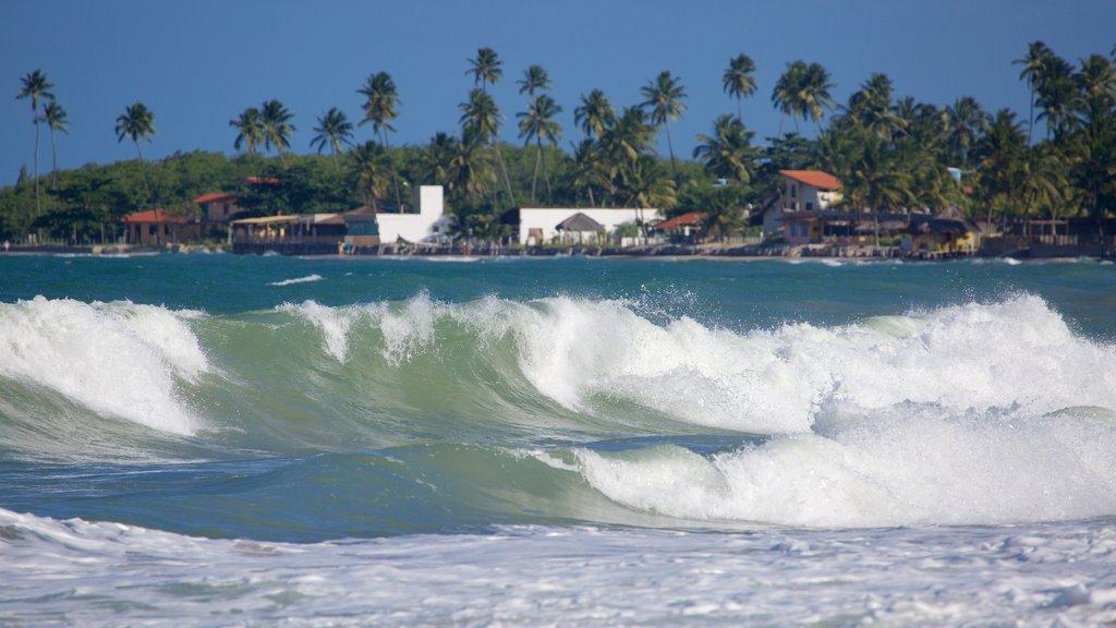 Maracaipe Beach featuring tropical scenes, general coastal views and surf