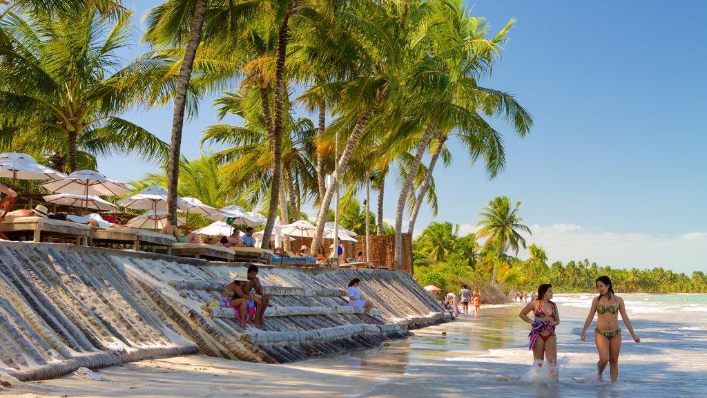 Praia de Ipioca mostrando cenas tropicais, uma praia de areia e paisagens litorâneas