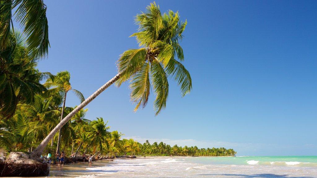 Praia de Ipioca caracterizando surfe, uma praia de areia e cenas tropicais