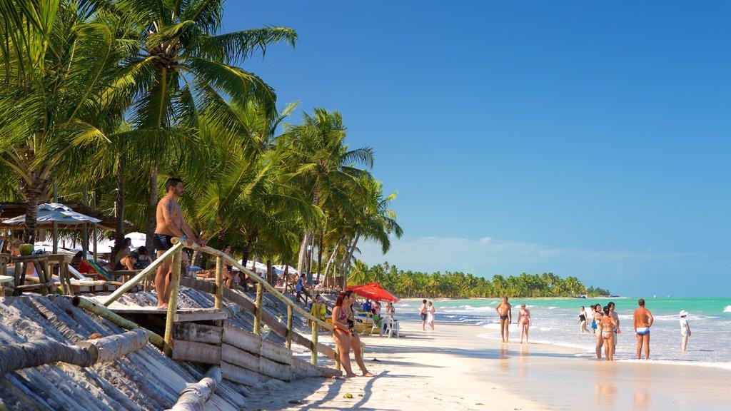 Praia de Ipioca caracterizando paisagens litorâneas, uma praia de areia e cenas tropicais