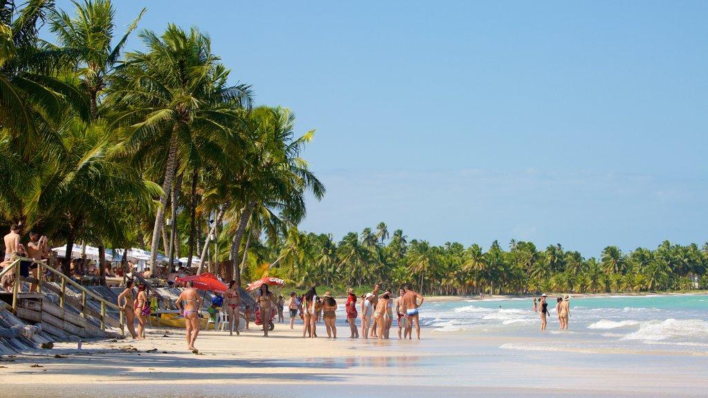 Praia de Ipioca que inclui uma praia de areia, paisagens litorâneas e cenas tropicais