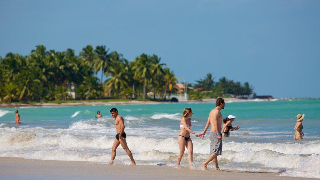 Praia de Ipioca mostrando paisagens litorâneas, surfe e natação