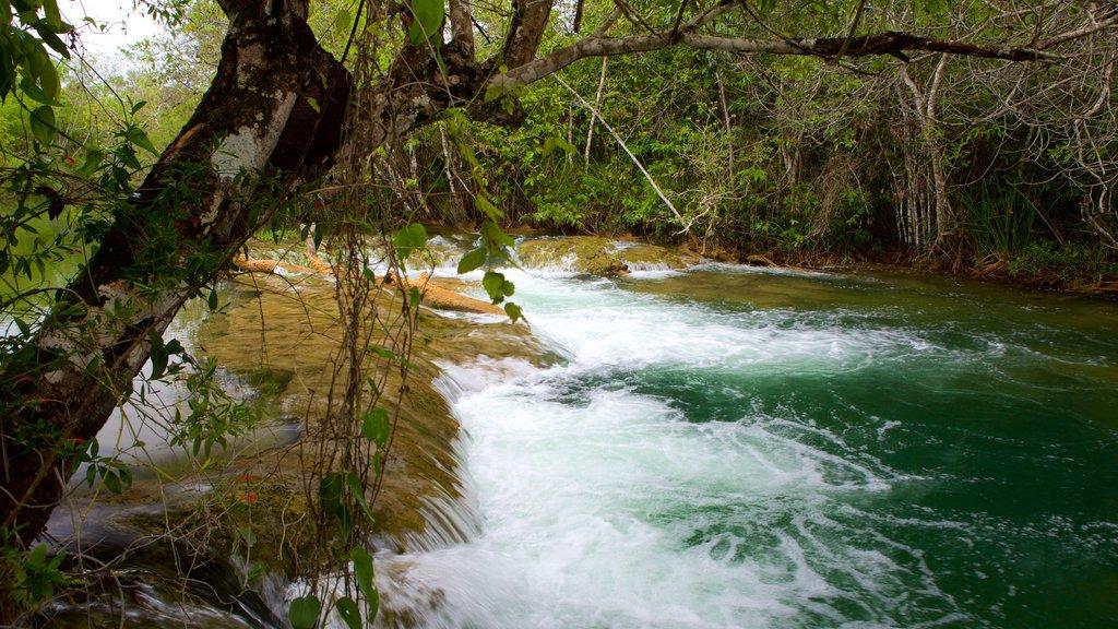 Parque Ecológico Rio Formoso que inclui mangues, floresta tropical e córrego