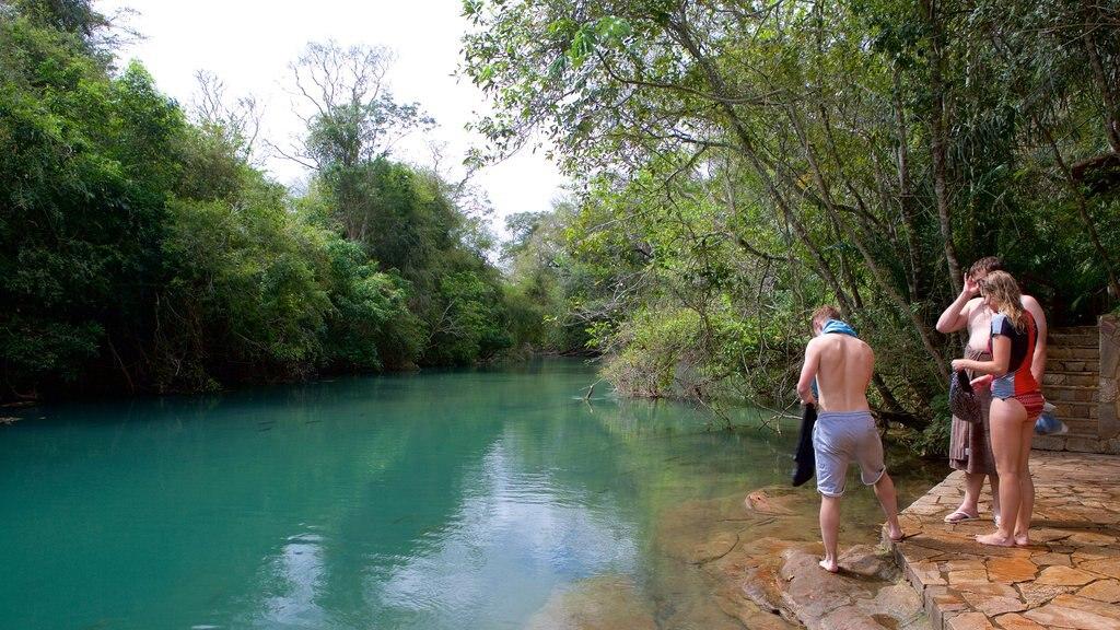 Bonito caracterizando um rio ou córrego e natação assim como um pequeno grupo de pessoas