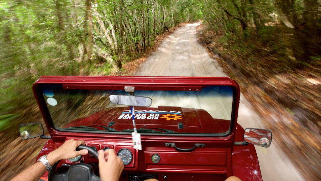 Natal featuring off road driving and forest scenes