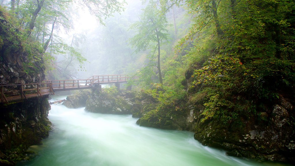 Vintgar Gorge which includes a bridge, mist or fog and a gorge or canyon
