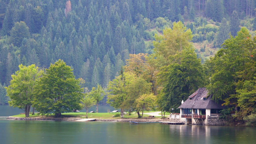 Lake Bohinj which includes forests, a house and a lake or waterhole