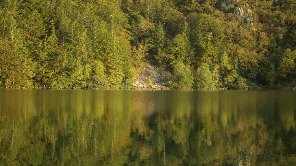 Lake Bohinj showing a lake or waterhole and forests