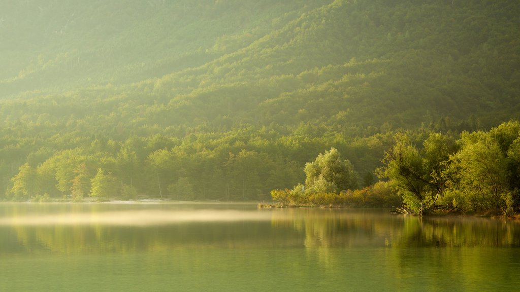 Lake Bohinj which includes a sunset, a lake or waterhole and forests